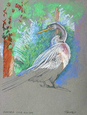 Anhinga Wall Art - Painting - Anhinga Sarasota Plein Air by Catherine Twomey