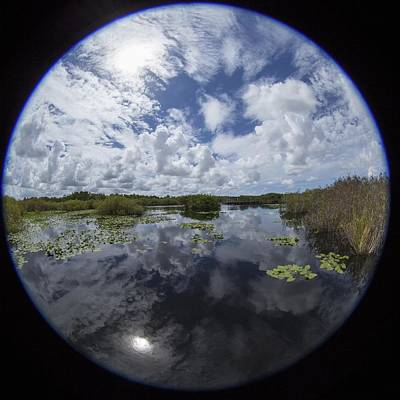 Photograph - Anhinga Trail 86 by Michael Fryd