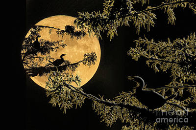 Anhingas In Full Moon Art Print by Bonnie Barry