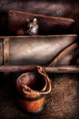 Photograph - Animal - Cat - Push Me by Mike Savad