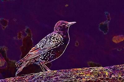 Digital Art - Animal Avian Bird Feathers Nature  by PixBreak Art