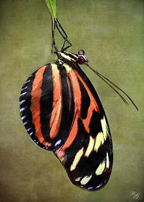 Photograph - Animal - Butterfly Art by Ron Grafe