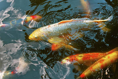 Gold Fish Photograph - Animal - Fish - Bestow Good Fortune by Mike Savad