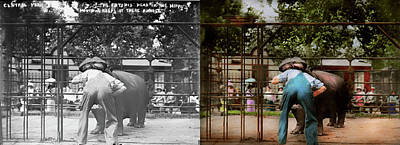 Photograph - Animal - Hippo - Stupid Human Tricks 1910 - Side By Side by Mike Savad