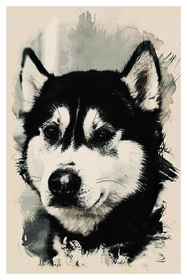 Animal Kingdom Series - Alaskan Huskie Art Print