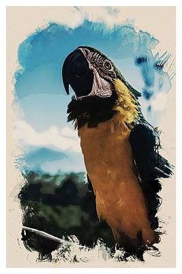 Animal Kingdom Series - Amazonian Macaw Parrot Art Print
