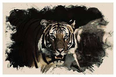 Animal Kingdom Series - Bengal Tiger Art Print