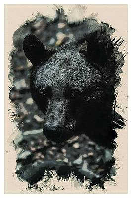 Animal Kingdom Series - Black Bear Art Print