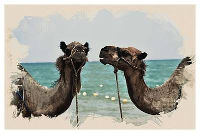Animal Kingdom Series - Camels Art Print
