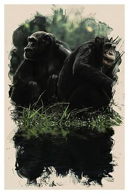 Animal Kingdom Series - Chimps Art Print