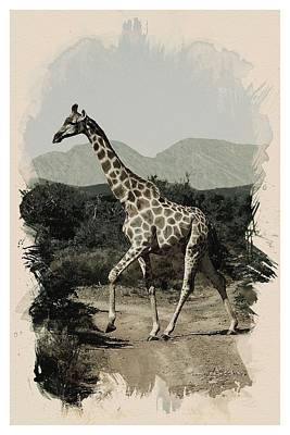 Animal Kingdom Series - Giraffe Art Print