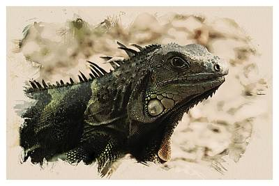 Animal Kingdom Series - Iguana Art Print