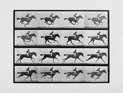 Photograph - Animal Locomotion - 16 Frames Of Racehorse Annie G. Print by War Is Hell Store