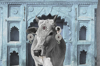 Photograph - Animal Royalty 7 by Sumit Mehndiratta