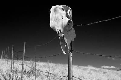 Photograph - Animal Skull On Barbwire Fence by Jim Corwin