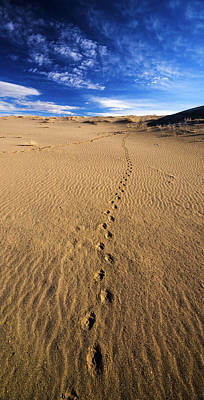 Animal Tracks In Sand At Bruneau Dunes State Park In Idaho Art Print by Vishwanath Bhat