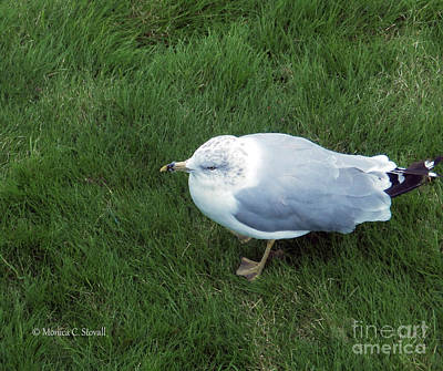 Photograph - Animals A17 by Monica C Stovall