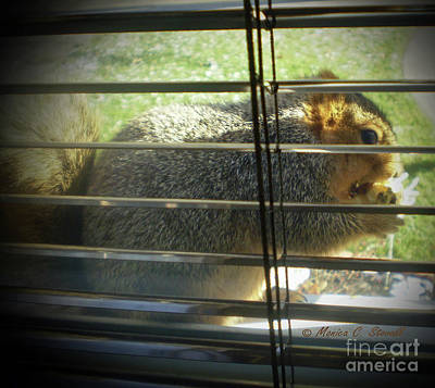 Photograph - Animals A28 by Monica C Stovall