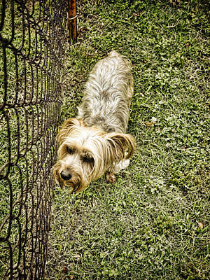 Photograph - animals - dogs- The Grass Is Always Greener -photograph by Ann Powell