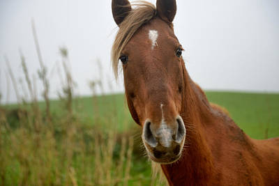 Photograph - Animals Livestock-10 by Joseph Amaral