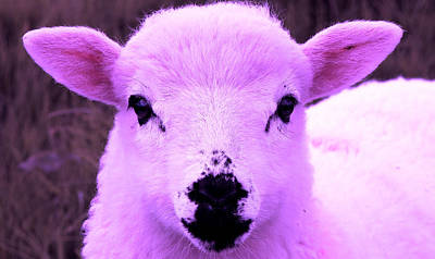 Photograph - Pretty In Pink by Aidan Moran
