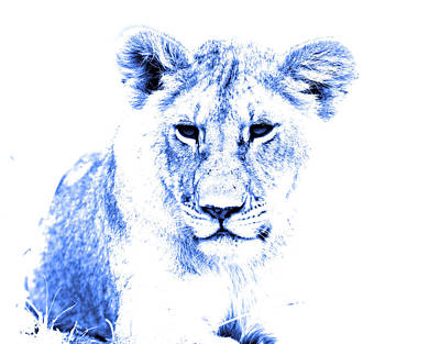 Photograph - Blue Lion by Aidan Moran