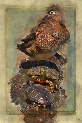 Photograph - Animals - Wildlife - Wood Ducks And Turtles by Ron Grafe