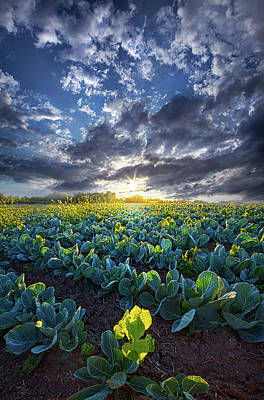 Cabbage Photograph - Ankle High In July by Phil Koch
