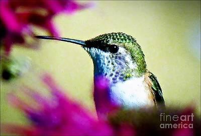 Photograph - Annas Humingbird by Julia Hassett