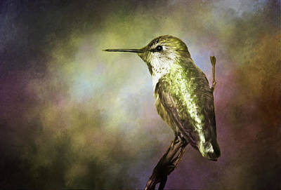 Photograph - Anna's Hummingbird 2 by Morgan Wright