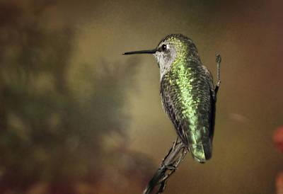 Photograph - Anna's Hummingbird 4 by Morgan Wright