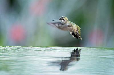 Photograph - Anna's Hummingbird - 8442-050717-1 by Tam Ryan