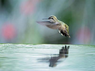 Photograph - Anna's Hummingbird - 8442-050717-2cr by Tam Ryan