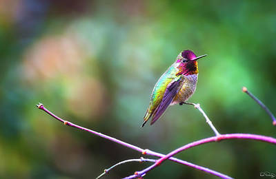 Photograph - Anna's Hummingbird II by Dee Browning