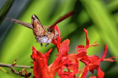 Photograph - Anna's Hummingbird Img 3254 by Craig Strand