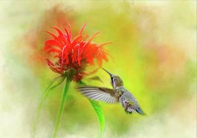 Anna's Hummingbird In Red Bee Balm Print by Lynn Bauer