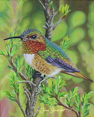 Painting - Anna's Hummingbird by Jane Girardot