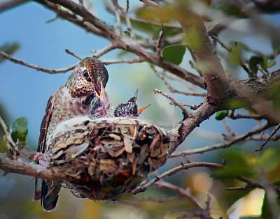 Hungry Chicks Photograph - Anna's Hummingbirds by Nikolyn McDonald