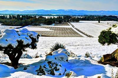 Photograph - Anne Amie Vineyard Winter by Jerry Sodorff
