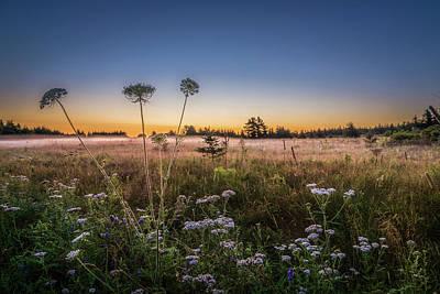 Photograph - Anne's Lace On Misty Cavendish Meadows by Chris Bordeleau