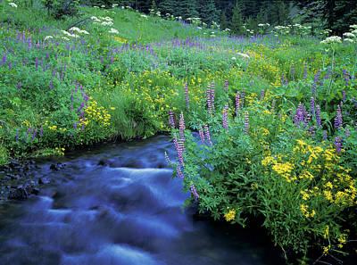 Photograph - Annie Creek Flowers by Robert Potts