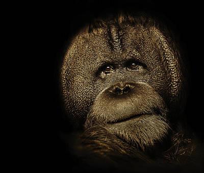 Photograph - Annie The Orangutan by Chandler Walker