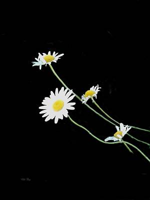 Photograph - Annie's Daisies by Wild Thing