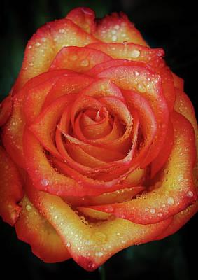 Photograph - Anniversary Roses by Elaine Malott