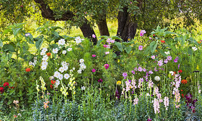 Photograph - Annual Border Garden by Alan L Graham