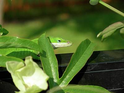 Photograph - Anole Camoflaugue by Jeanne Kay Juhos
