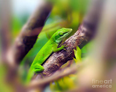 Photograph - Anole On A Branch by Kerri Farley