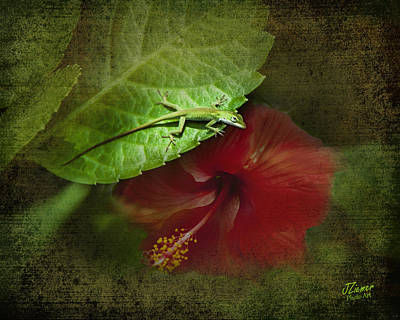 Photograph - Anole On Hibiscus by Jim Ziemer