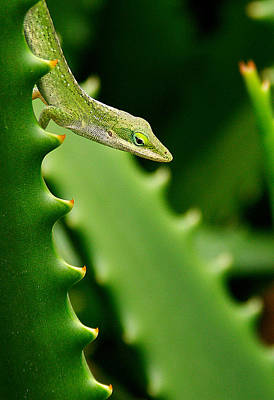 Photograph - Anole by Roger Mullenhour