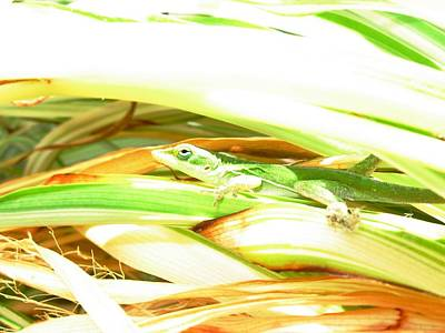 Art Print featuring the photograph Anole Sunning by Jeanne Kay Juhos